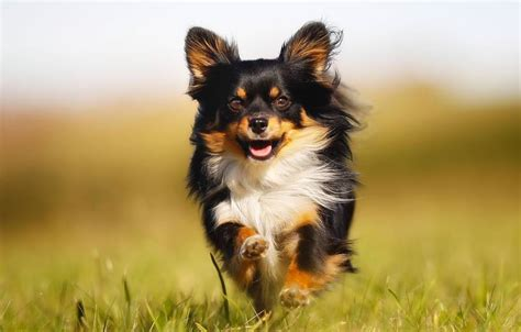 kleine hunde kleine hunde gro 223 e verantwortung agila