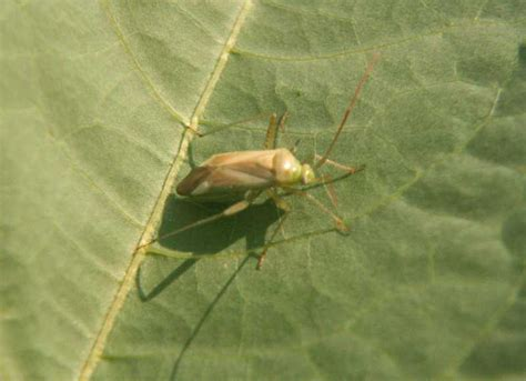 image gallery plant bugs
