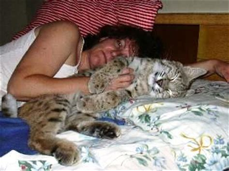 bob s house for dogs rexano big cat feline gallery pet bobcat
