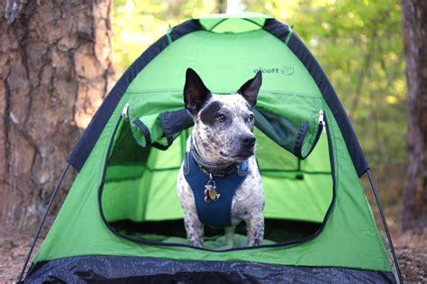 cing is in tents alcott explorer pup tent review