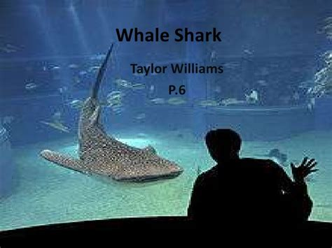 Whale Shark Ppt Shark Powerpoint