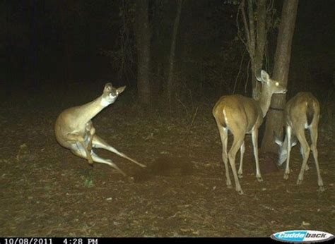 30 best trail cam photos ever captured
