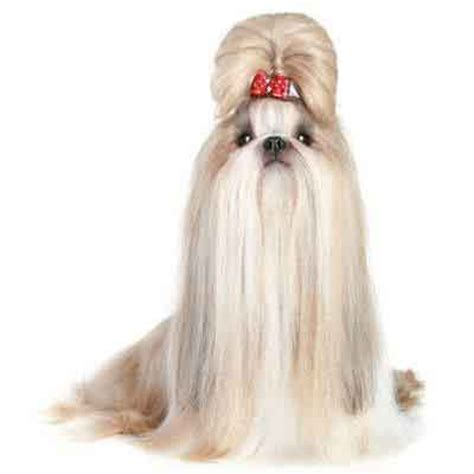 haired shih tzu 7 shih tzu haircuts petcarerx