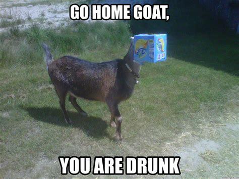 Goat Memes - goat meme related keywords goat meme long tail keywords