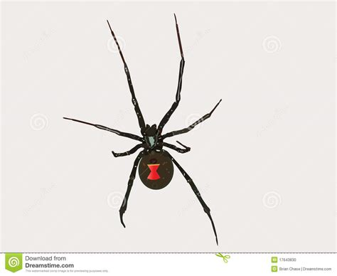 imagenes viudas negras ara 241 a de la viuda negra del vector ilustraci 243 n del vector