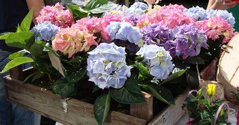 fiore raro fiore raro navigli in fiore