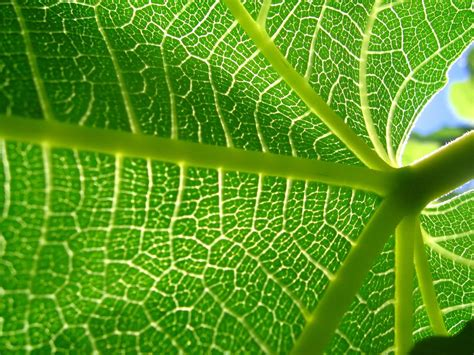 Best Plants For Air Quality by Voronoi Diagram In Architecture Tomaszjaniak