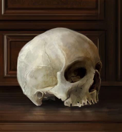 backyard skulls still life study skull by charfade on deviantart