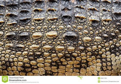 Cowhide Prices Crocodile Skin Texture Stock Photography Image 29611792