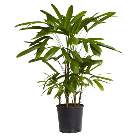 indoor palm stylehunter collective 3 indoor plants that are hard to