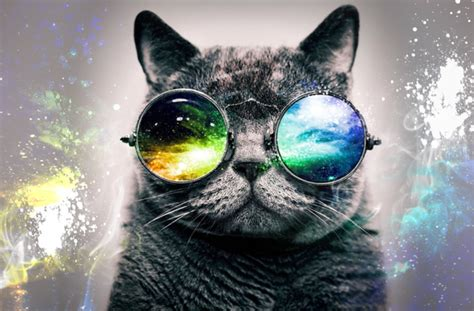 wallpaper cat 3d glasses hd desktop background galaxy cat by pattersondesigns on