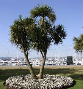 Pictures Of Beautiful Backyards 5 Reasons To Book A Short Break On The English Riviera