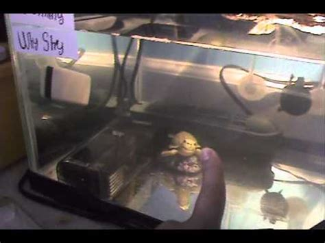 how to keep your turtle tank clean youtube