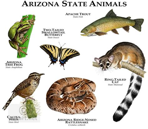 i mammal the story of what makes us mammals books wildlife state animals