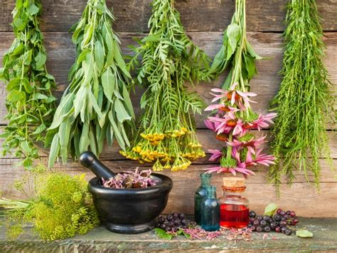 grow an herb garden 187 gardening in the panhandle 12 healing herbs you need to grow in your medicinal garden