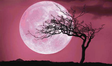 pink moon pink moon 2017 is the april full moon pink science