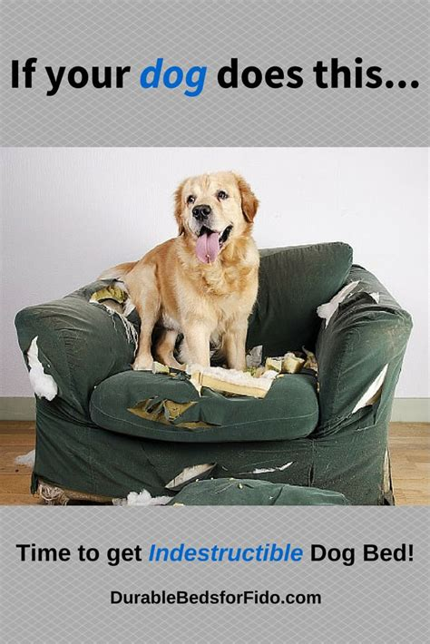 best dog beds review best dog beds for large dogs ultimate buying guide reviews