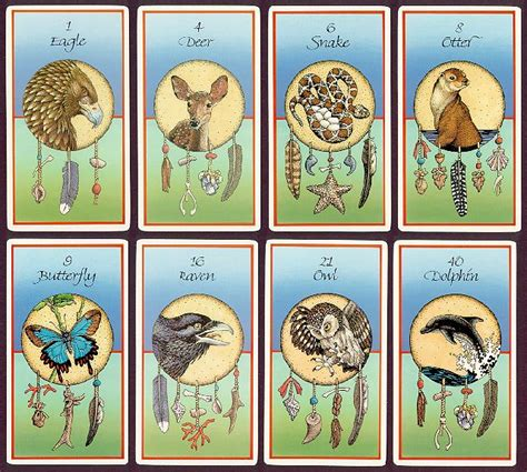 animal tarot cards a life in the second half medicine cards