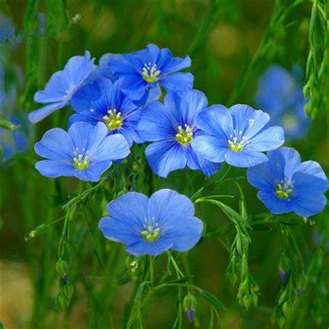 fiori di lino acquista all ingrosso lungo vasi di fiori da