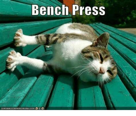 bench meme 25 best memes about asc asc memes