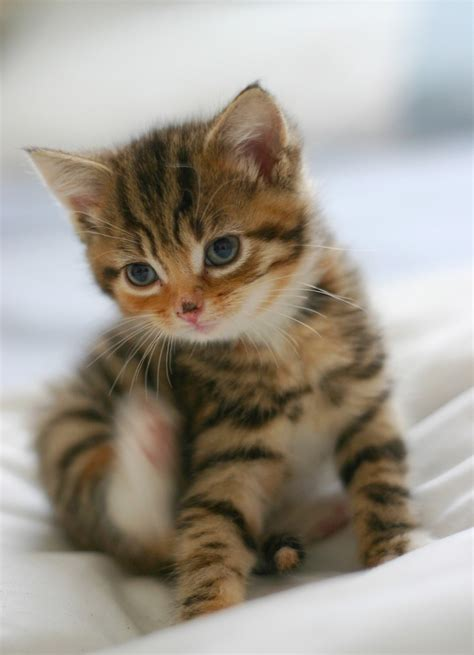 Cutest Cats top 20 most cutest cat pictures cutest cats