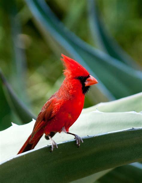 birdmanbob more arizona birds