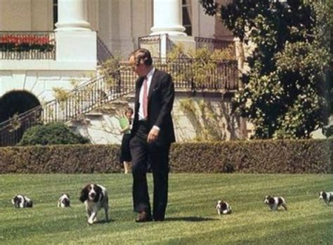 white house dog dogs of the white house the presidential pet museum my kid has paws