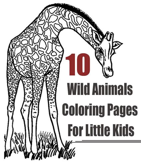 printable wild animal pictures top 25 free printable wild animals coloring pages online