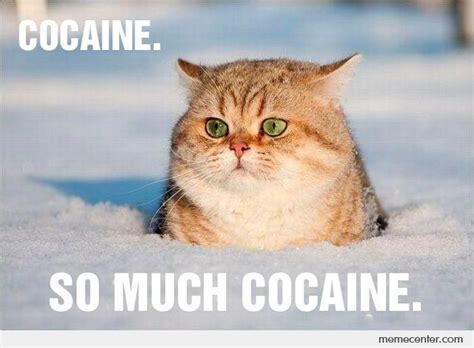 Cat Cocaine Meme - cocaine so much cocaine by ben meme center