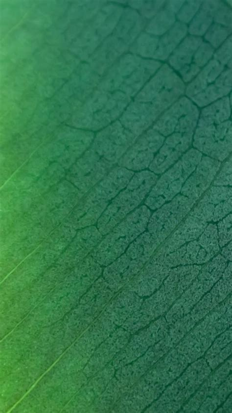 leaf pattern textured wallpaper natural green leaf texture pattern iphone 6 wallpaper