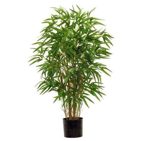 bamboo house plant 1000 ideas about bamboo house plant on pinterest humidifier inside plants and
