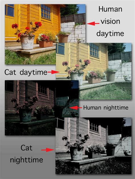 do cats see in color what do cats see