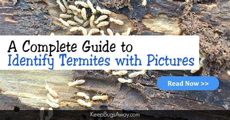 termites     human eye  pictures