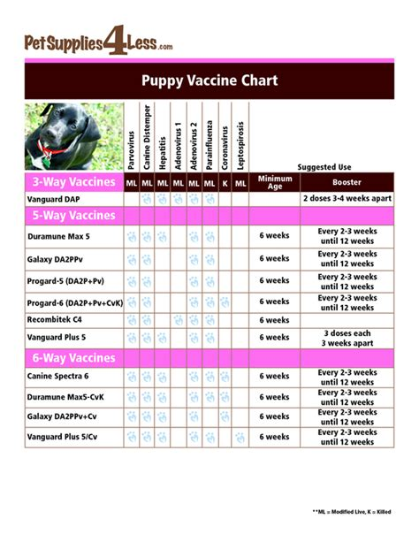 vaccination schedule for dogs puppy vaccination schedule chart australia printable immunization schedule and