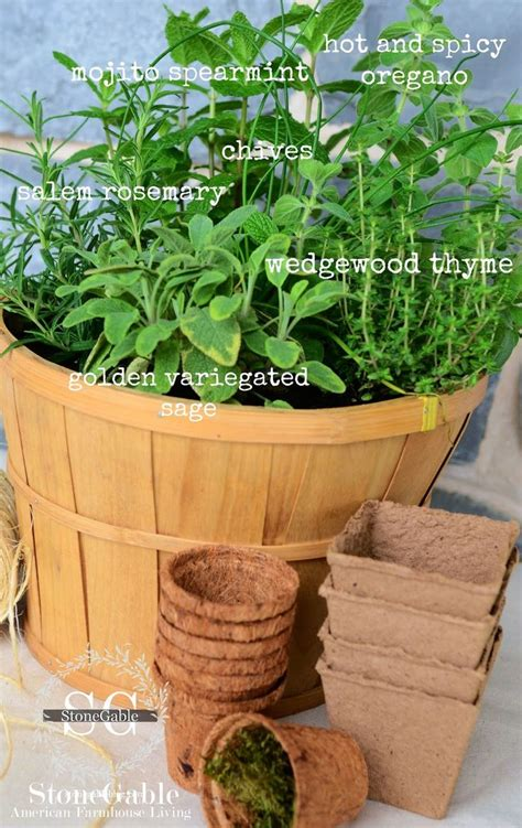 kitchen herb garden ideas best 25 kitchen herb gardens ideas on pinterest kitchen
