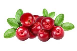 Cranberry natural health news