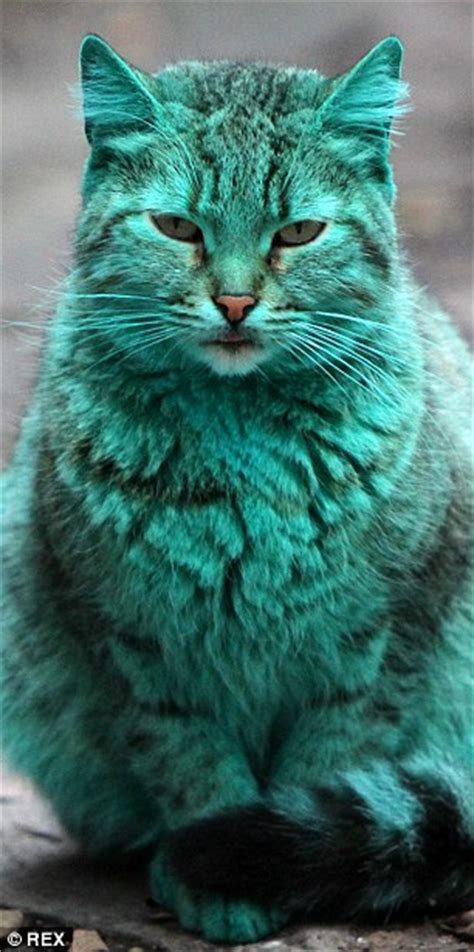 Green Cat bulgaria s mysterious green cat returns after vanishing