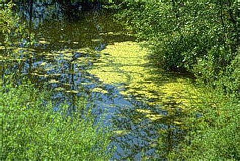 phosphat im teich 2016 nochmals algen