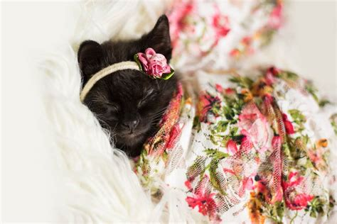 Dress Baby Kucing who needs a baby when you can just dress up a kitten