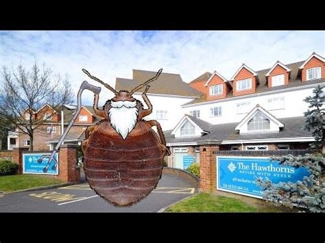 how long can bed bugs live without a host faq how long can bed bugs live without a meal youtube
