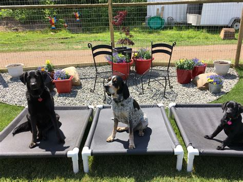country canine care offers boarding daycare