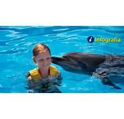 &161Conoce Las Caracter&237sticas De Los Delfines