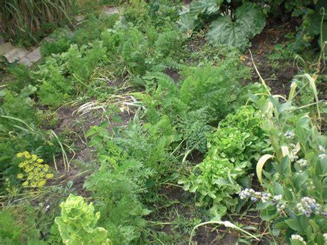 Garten Tipps by Obst Und Gartenbauverein Rheinzabern E V Juli