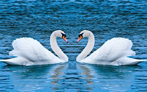 4k wallpaper of love 4k love wallpapers high quality download free
