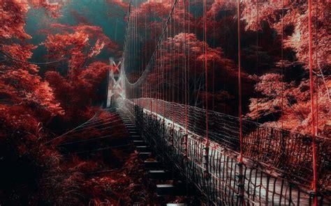 nature landscape red forest bridge mist trees