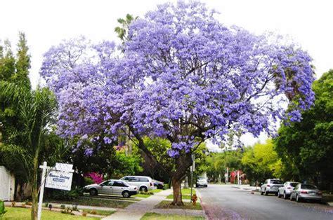 fiori tropicali fiori tropicali da coltivare in giardino idee green