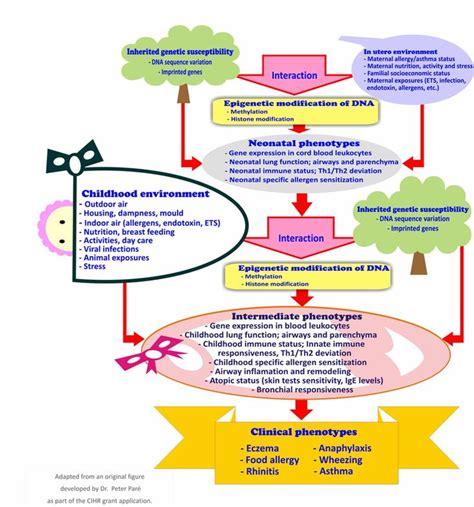 immune system flowchart 65 best images about immune on autoimmune