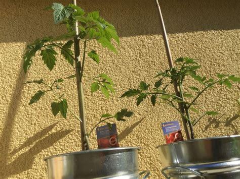 immergrüne pflanzen für sonnige standorte dekor pflanzen balkon