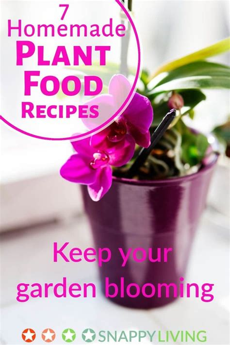 homemade flower food plant food from the store isn t cheap and it often has