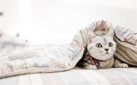 bed wallpaper cat bed hd desktop wallpapers 4k hd